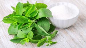 Stevia kaufen