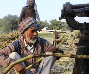 Zuckerrohranbau