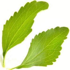 Frisches Stevia